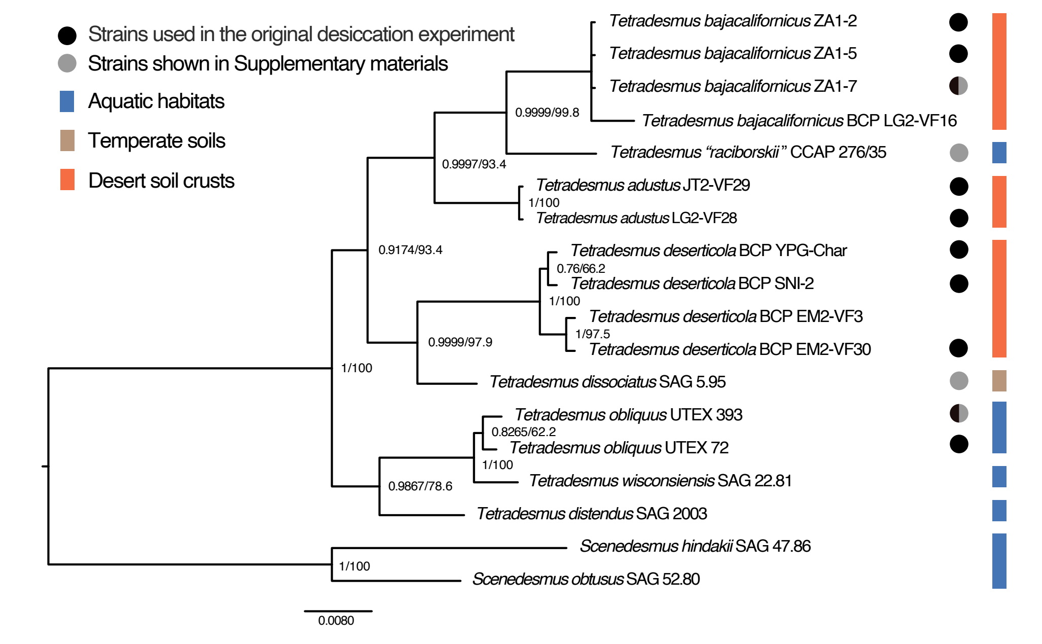 Fig1 tetradesmus part bi