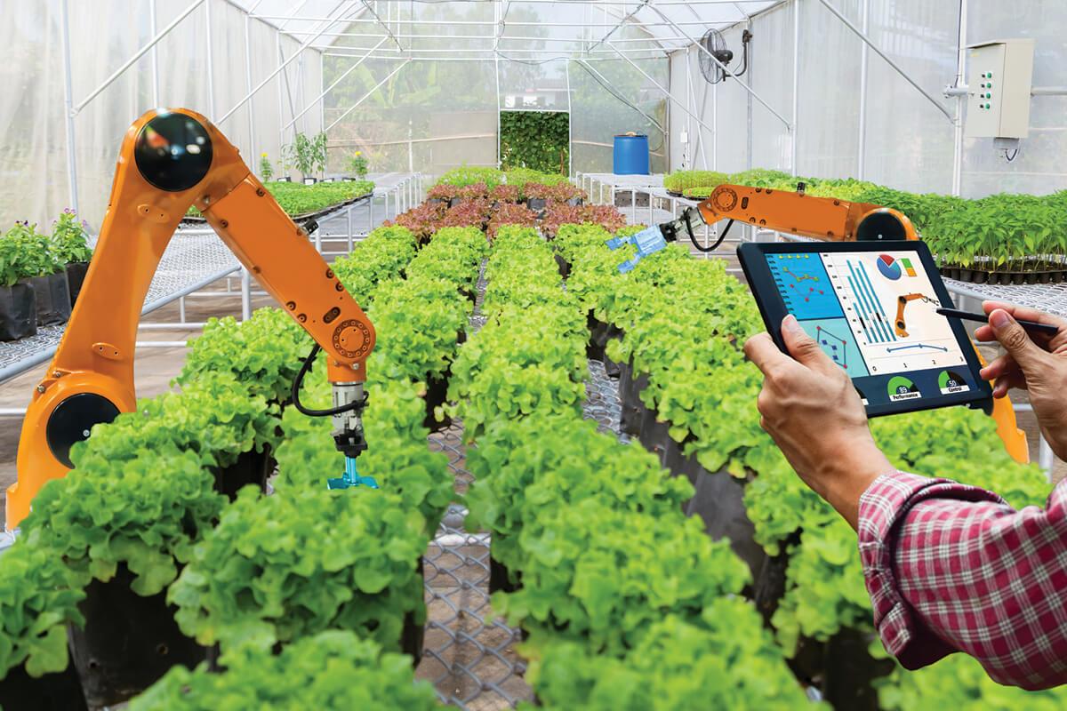 L'ingegneria sanitaria ambientale a supporto dell'agricoltura urbana per lo sviluppo di un'economia circolare