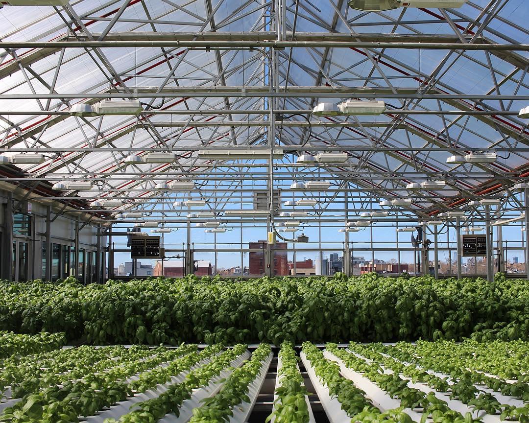 Urban farming, una soluzione per lo sviluppo sostenibile delle città