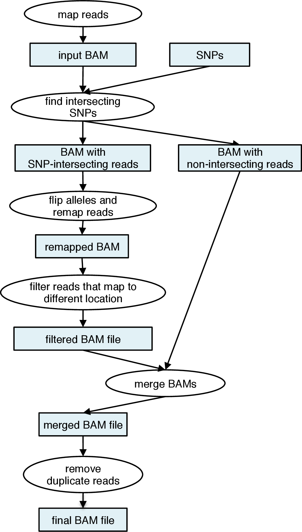 Wasp mapping pipeline